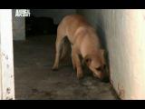 Отдел по защите животных, Южная Африка 2008-12-14
